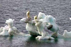 polarbears_450x300