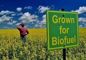 biyoyakıt ve fosil yakıt